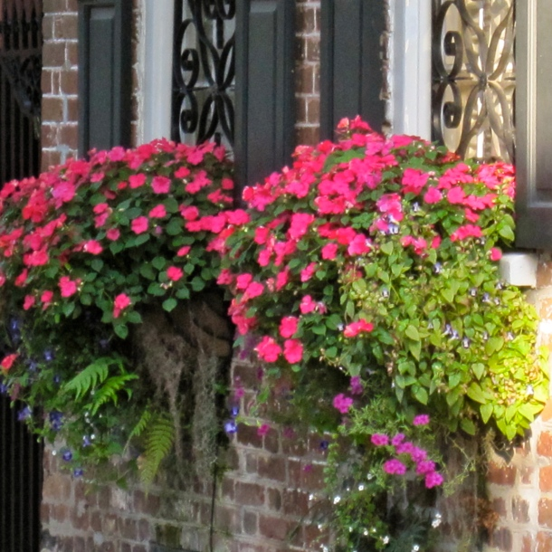 Flower Boxes