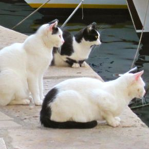 Cats Rule in Dubrovnik