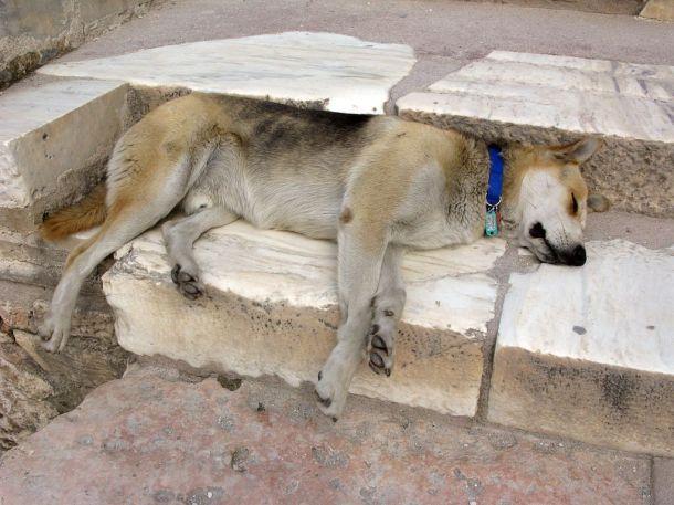 Petros_the_dog