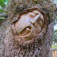 Tree Spirits of St. Simons Island: The Watchers in the Hammock