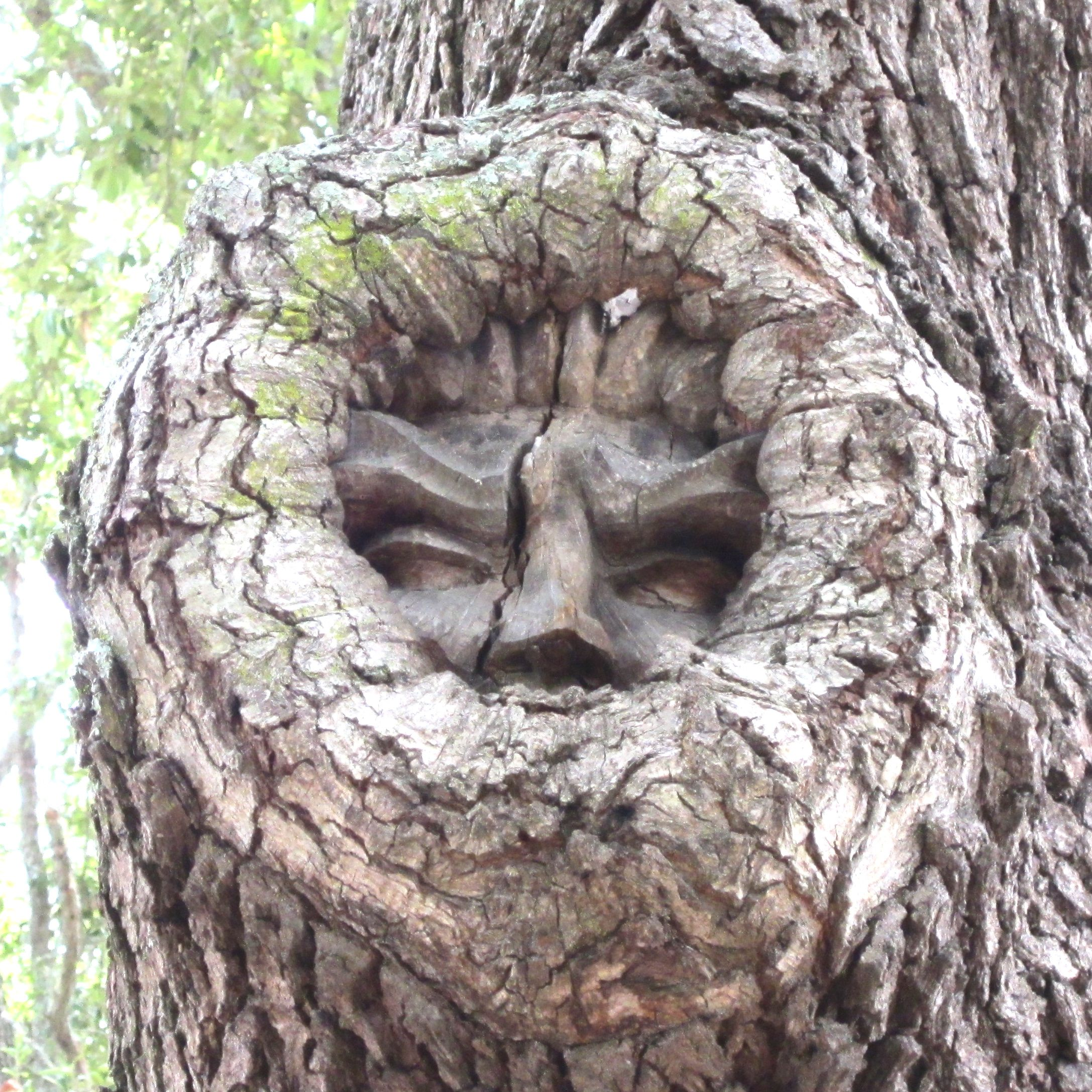 Tree Spirits of St. Simons Island: The Search Continues | GALLIVANCE