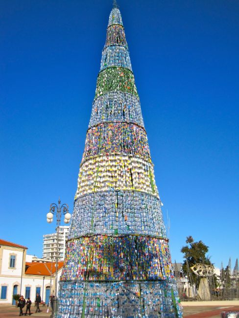 Larnaca tall can tree