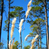 Okefenokee Swamp: A Hike in the Land of Trembling Earth