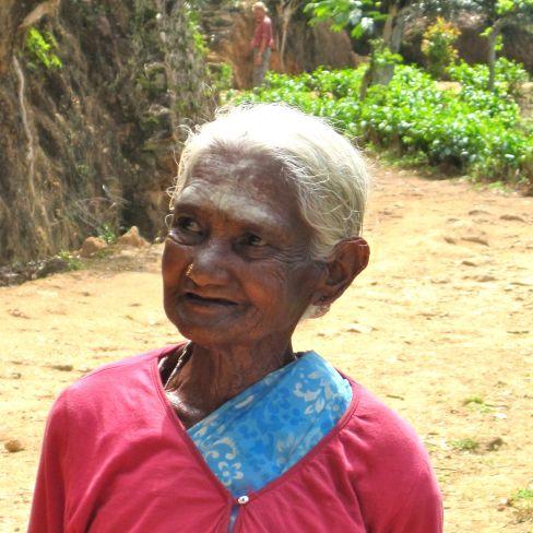 Tea Plantation Lady