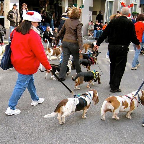 Beagle Club