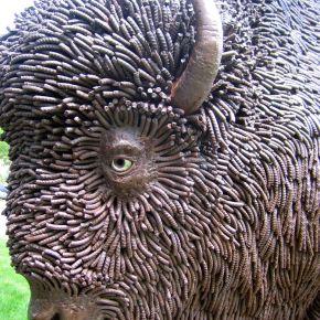 A Buffalo Roams the CapitolLawn