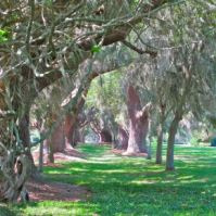 https://gallivance.net/2012/05/03/the-sentinels-of-st-simons-island/