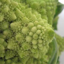 Broccoli Romanscu