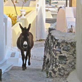 Donkey Tales fromSantorini