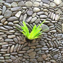Fern on Wall Bali