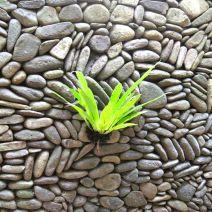 Fern on Wall Bali