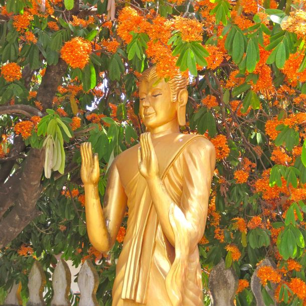 Luang Prabang Buddha Orange Blossoms