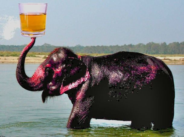 Pink Elephant by By Durova via Wikimedia Commons