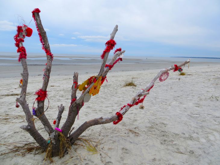 Valentine's Beach Tree