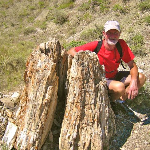 J Petrified Wood