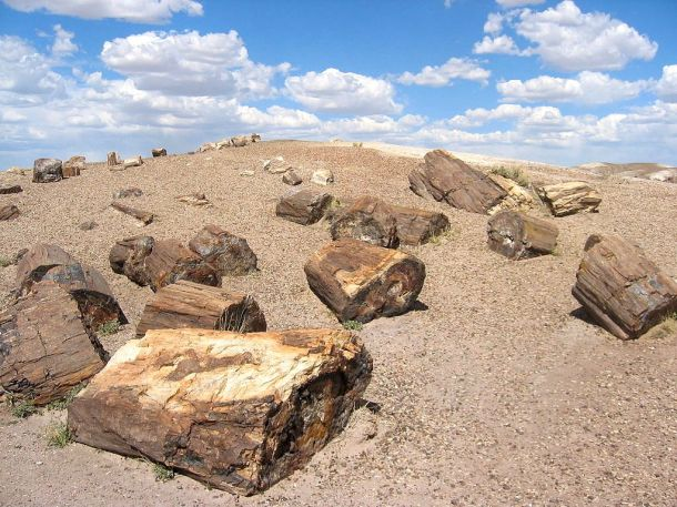 Petrified_Forest_National_Park
