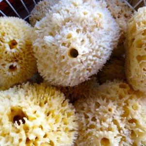 Wool sponges