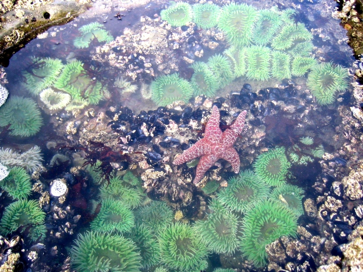 Sea Star and Anemone