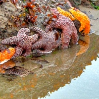 Life In A Tide Pool: Not As Easy As It Looks