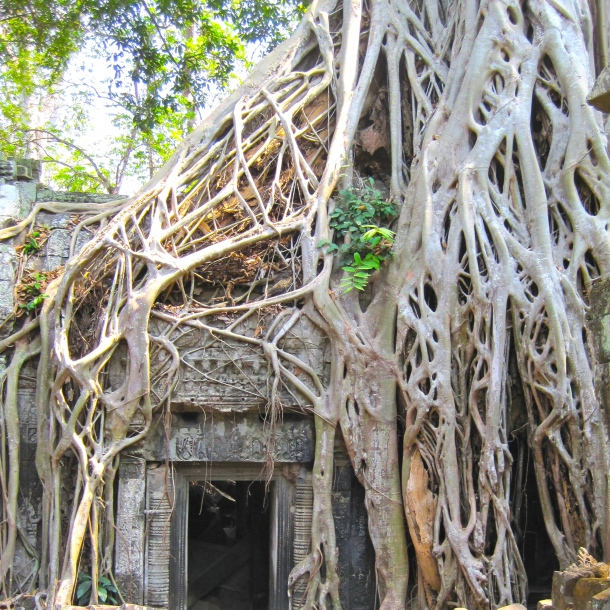 White Roots, Ta Prohm