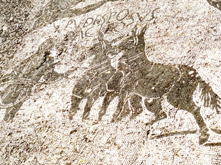 Mule mosaic