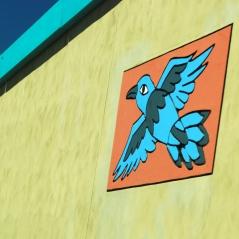 Mexican bird