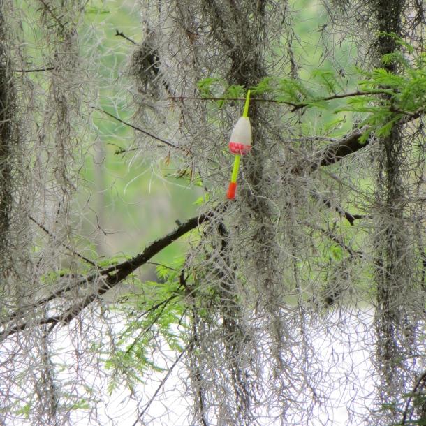 Bobber in Cypress