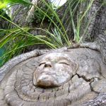 murphys-tree-spitit2