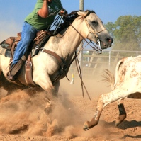 calf roping - Version 2