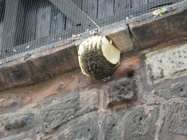 Beehive on Wall