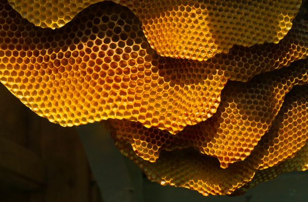 Honeycomb_structure_(6248780733)