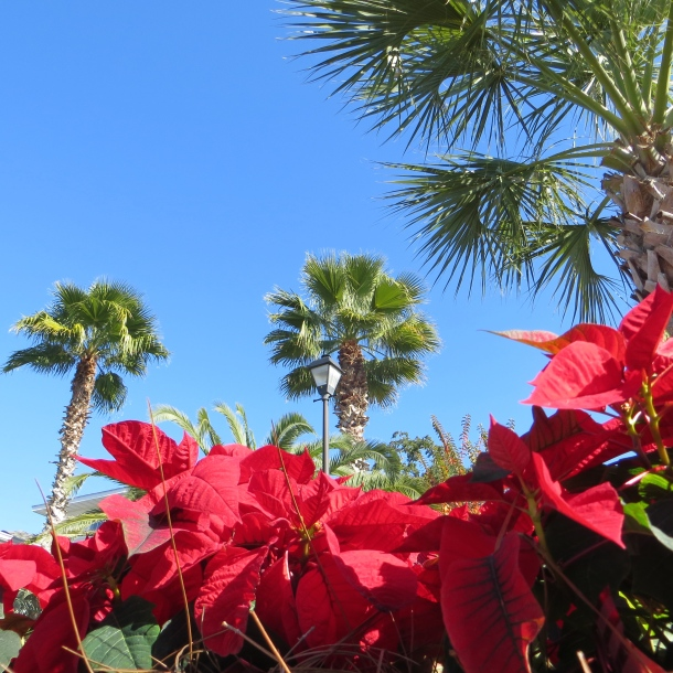Palms and Poinsettias