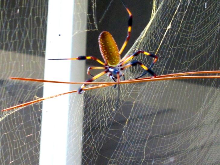 Repairing her web