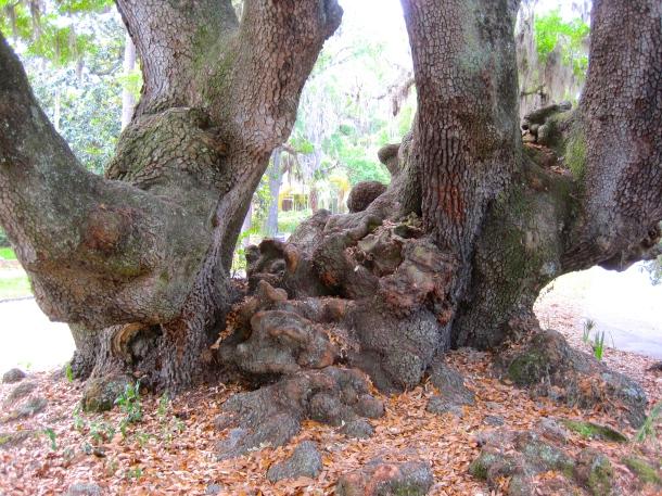 Lover's Oak 2