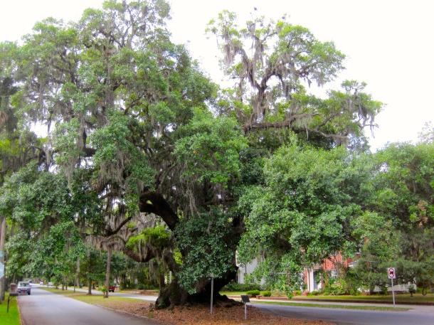 Lover's Oak 3