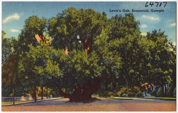 Lover's Oak Postcard