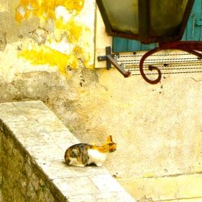 Sentinel Watch Cat