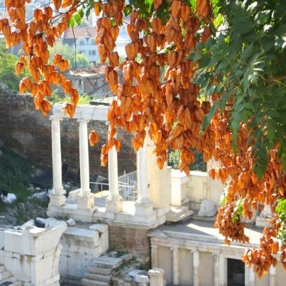 Lantern Tree Above Roman Ampitheater Plovdiv, Bulgaria