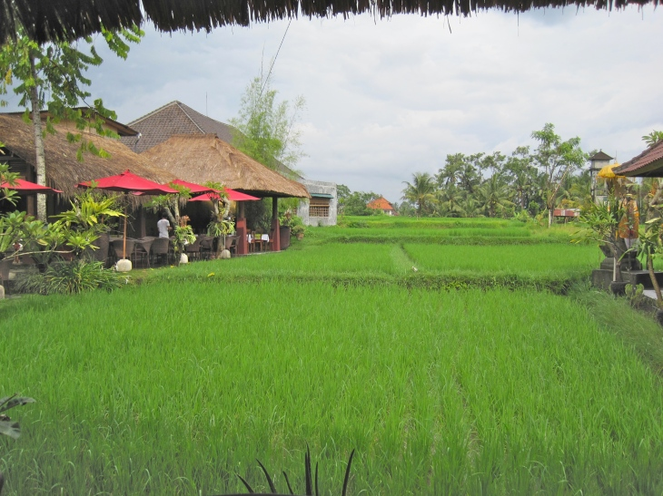 Rice Paddy off Porch