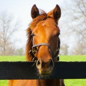 No Horse Sense? You've Come to the RightPlace