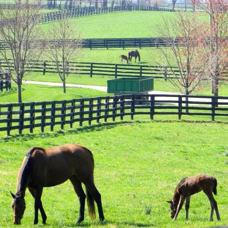 Fields of Foals