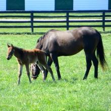 New Foal 2