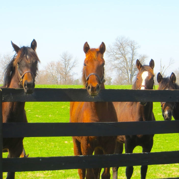 Yearlings 2
