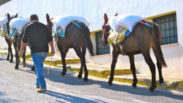 Oia Donkeys 2