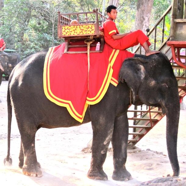 elephant-driver