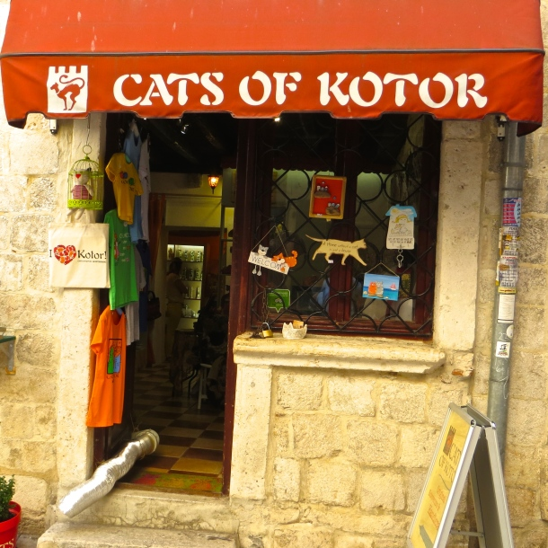 cats-of-kotor-1