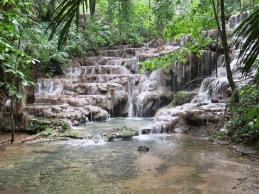 Jungle 5
