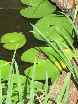 Sue's Lily pad and frog