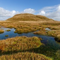 Bog Bodies: A Real Human Connection To Our Ancient Past